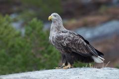 Noord Europa Vogels